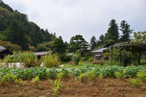 20141004 (1205)鈴木農園