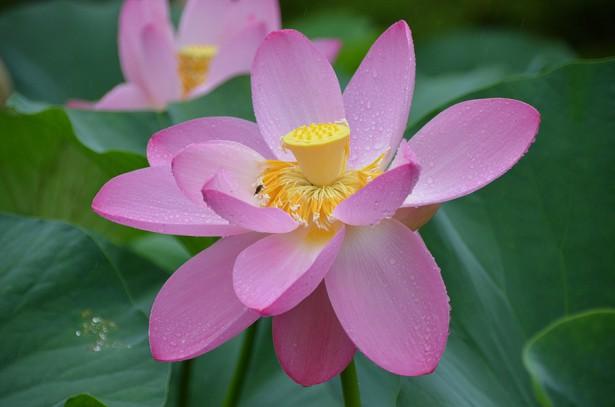 Lotus067)